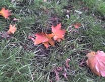 Настала осень