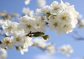 7 апреля - Праздник Благовещения