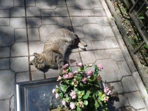Кот на могилке