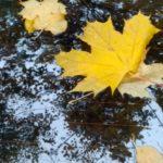 Опавшие листья в октябре