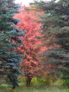 Переславль. Дендрологический сад. Осенние деревья 1